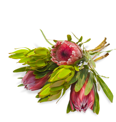 Bunch of protea flowers